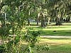 View of front lawn from porch